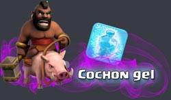 cochon-gelweb.jpg